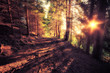 Vintage style image of old forest at sunny morning