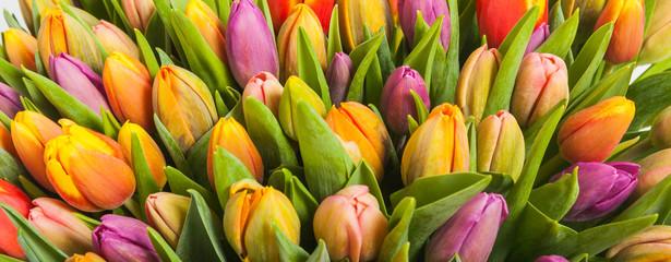 Panel Szklany Tulipany bouquet of multicolor tulips