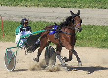 Trotting Races At The Hippodrome Sibirskoe Podvorie