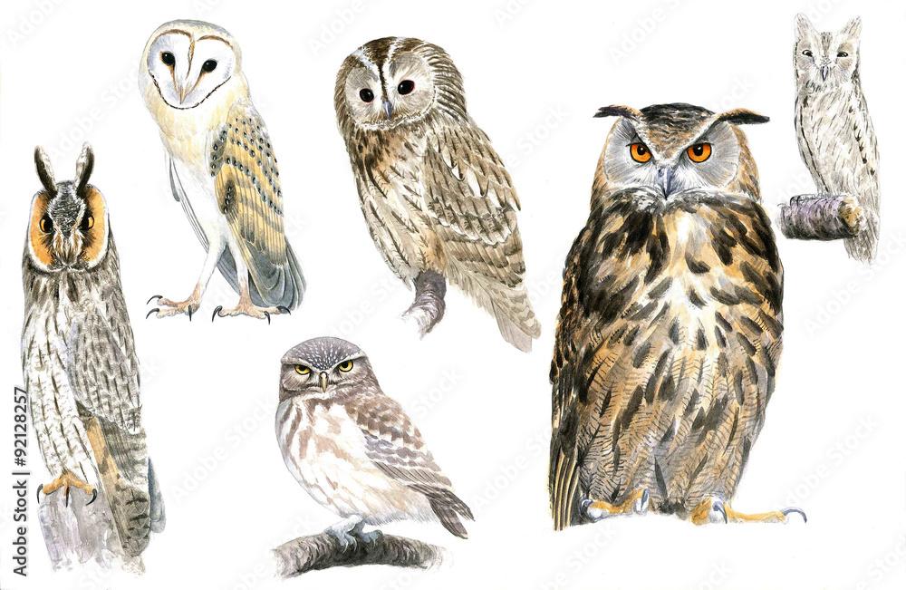 Fototapety, obrazy: Owls