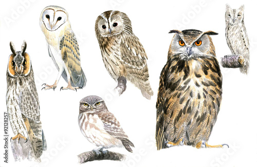 Tuinposter Uilen cartoon Owls