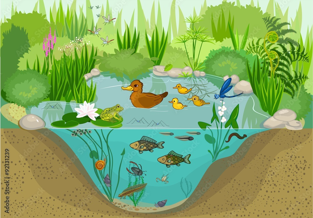 Fototapeta At the pond