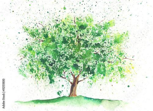 Akwarela letnie drzewo