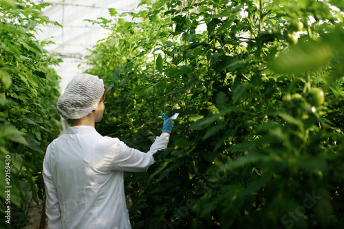 Fotografia  Biotechnology woman engineer examining plant leaf for disease in greenhouse