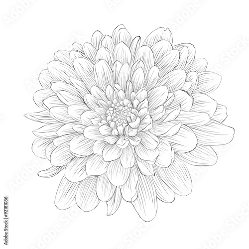 Carta da parati beautiful monochrome black and white dahlia flower isolated on white background