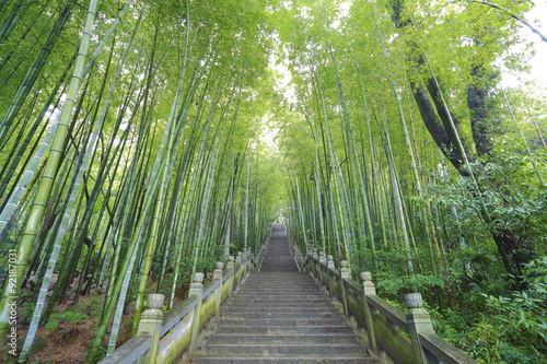 In de dag Bamboo Scenic mountaineer step stairs next to the bamboo forest