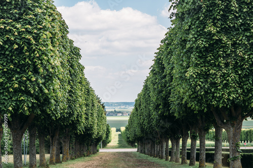 Photo  promising avenue, the track of the columns and trees