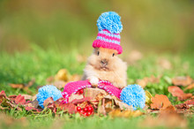 Little Funny Rabbit Dressed In Woolen Knitted Hat In Autumn