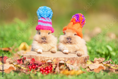 Two little funny rabbits dressed in woolen knitted hats in autumn