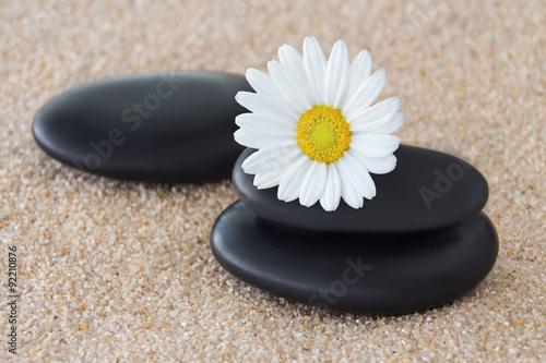 bialy-rumianek-na-czarnych-kamieniach-do-masazu