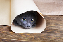 Cute Blue Kitten Is Sitting And Playing In Tube Of Paper.