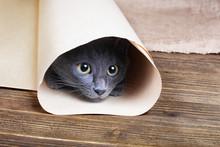 Cute Blue Kitten Is Sitting An...