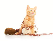 Cute Little Red Kitten Playing With Balls Of Yarn And Looking Straight At Camera, Isolated On A White Background