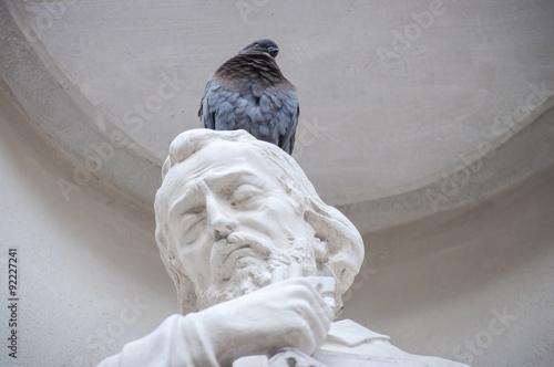 Fotografía  Piccione su testa di statua