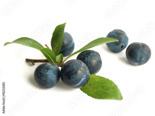 Blackthorn (Prunus spinosa) Canvas-taulu