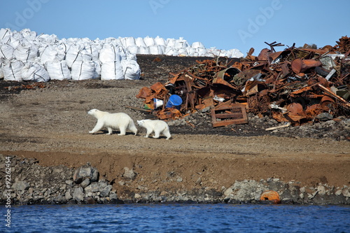 In de dag Ijsbeer Polar bear survival in Arctic – pollution problems