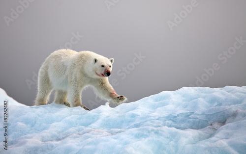 Staande foto Ijsbeer Polar bear on iceberg
