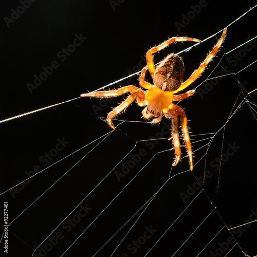 Valokuva  spider right