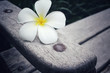 Frangipani flower on bench chair