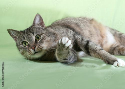 Fototapeta Striped cat lying on green obraz na płótnie