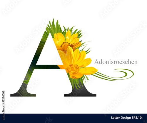 Fototapeta Letter A vector alphabet with adonisroeschen flower. ABC concept obraz na płótnie