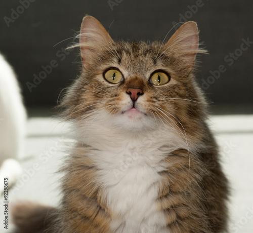 Garden Poster Hipster Animals Tabby cat on gray