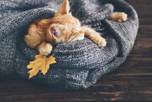 Gigner Kitten Sleeping