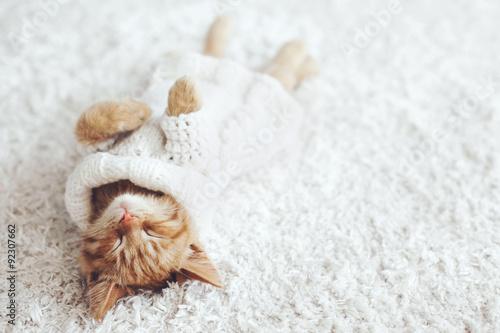 Photo  Gigner kitten