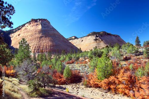 Fotografie, Obraz  Checkerboard Mesa at Zion National Park