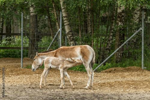Fotobehang Ree Little horse