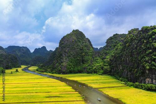 Poster Jaune Rice field and river, NinhBinh, vietnam landscapes