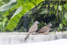 Two Dove Stand On Fence