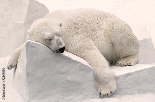 Белый медведь спит. Wallpaper Mural