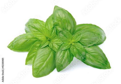 Fotografie, Obraz  Fresh basil leaves