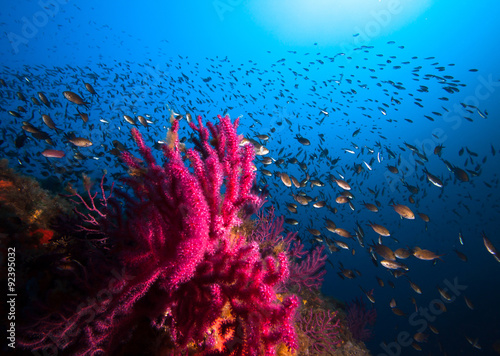 Poster Onder water Lots of fish in a mediterranean reef
