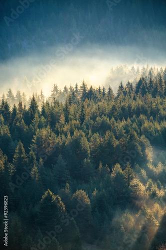 mglisty-las-sosnowy-na-zboczu-gory-w-rezerwacie-przyrody