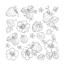 Collection Of Strawberries Elements.