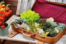 Alter Bepflanzter Koffer