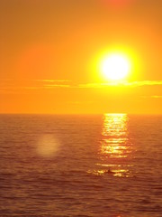 Obraz na PlexiCoucher de soleil avec les dauphins