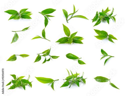 Obraz Fresh green tea leaf on white background - fototapety do salonu