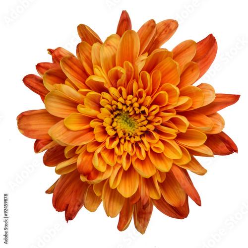 Orange chrysanthemum isolated Poster Mural XXL