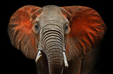 Fototapeta Animals - Elephants of Tsavo