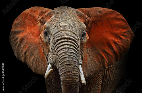 Deurstickers Olifant Elephants of Tsavo