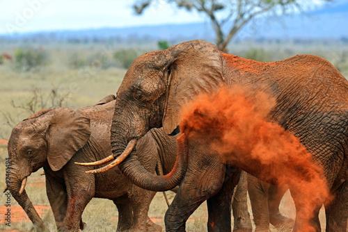 Fotomural Elephants Tsavo East