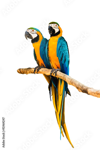 Autocollant pour porte Perroquets Couple Macaw Parrot isolated on white background