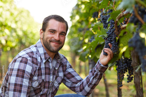 Fotografie, Obraz  Vinař na vinici