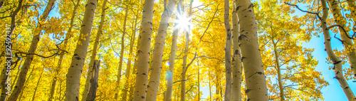 Photo  Sunburst in Aspen Grove