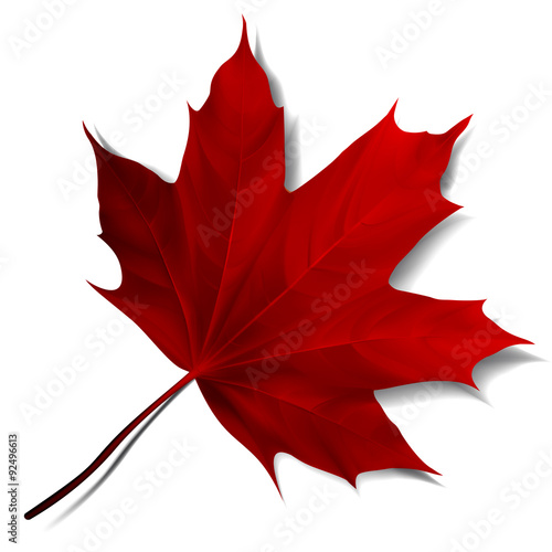 Fotografie, Obraz  Realistic red maple leaf