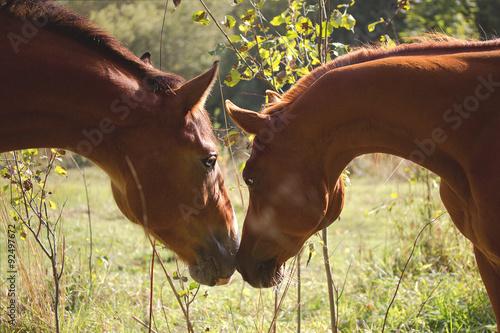 Photo  Horse love