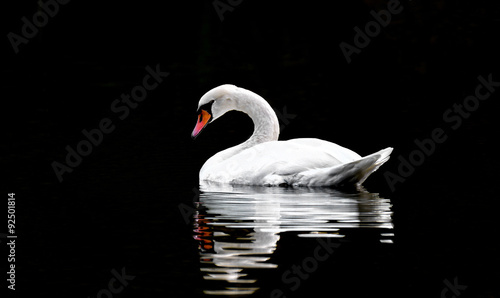 Papiers peints Cygne Swan swin on lake with black backround